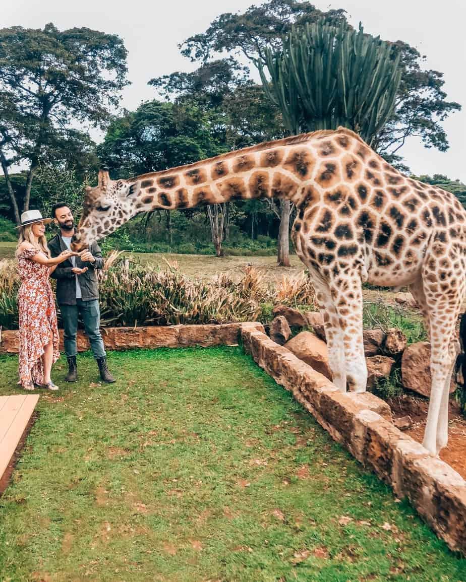 kenya safari giraffe manor